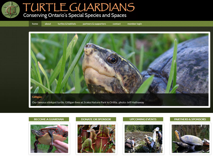 Turtle Guardians screenshot